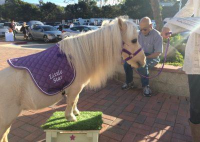 Senior Expo 2015 pony at Family Service Agency